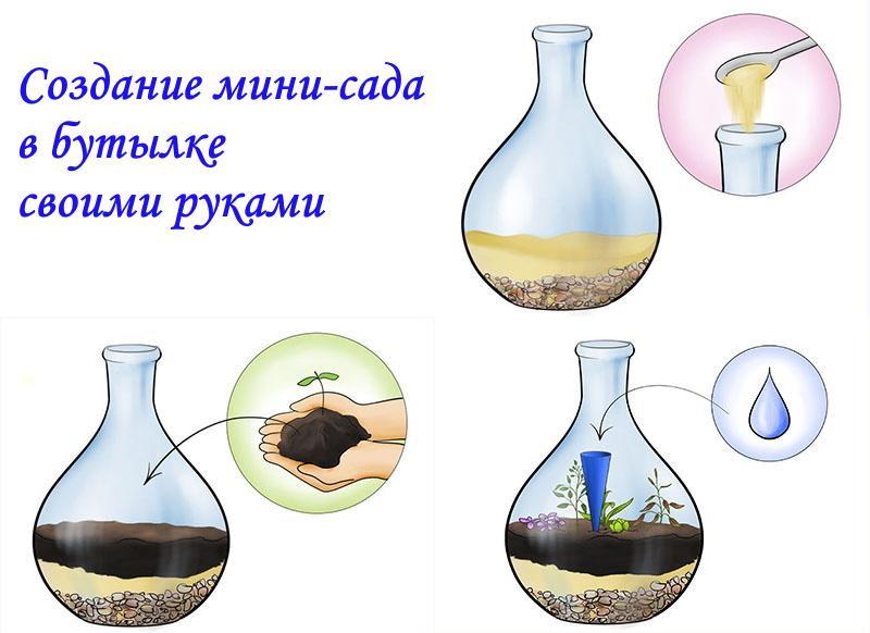 создание мини-сада в бутылке своими руками