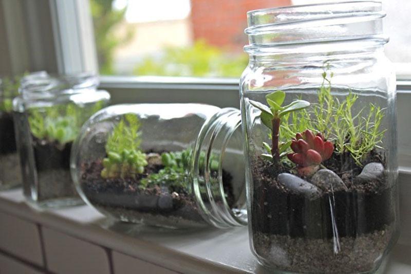 миниатюрные сады в стеклянных емкостях