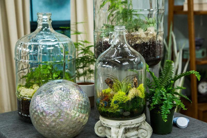 использование разных растений