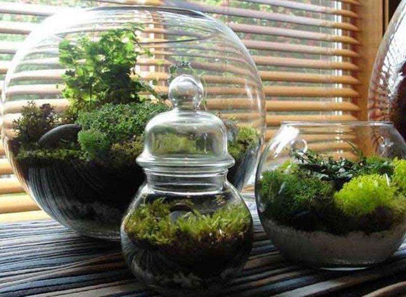 медленнорастущие растения