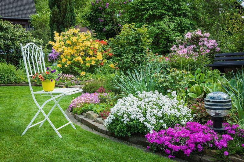 Какие комнатные растения вызывают аллергию