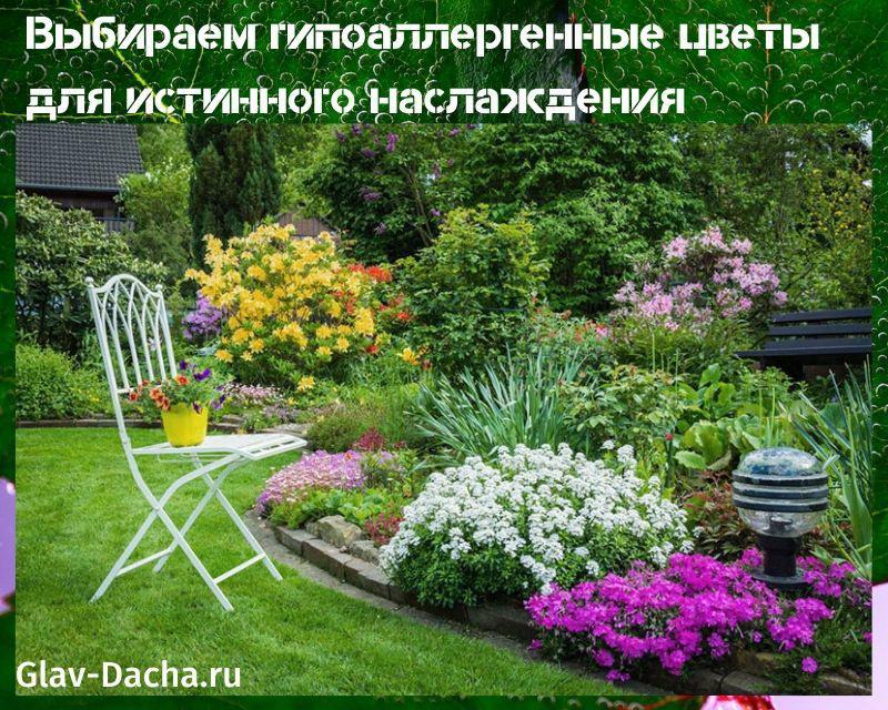 гипоаллергенные цветы