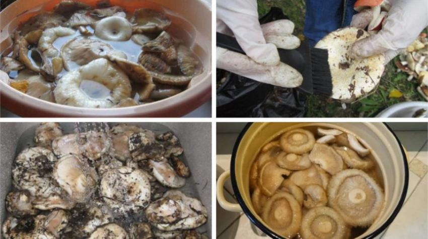 Грузди как обрабатывать и готовить. Как правильно обработать грибы грузди после сбора
