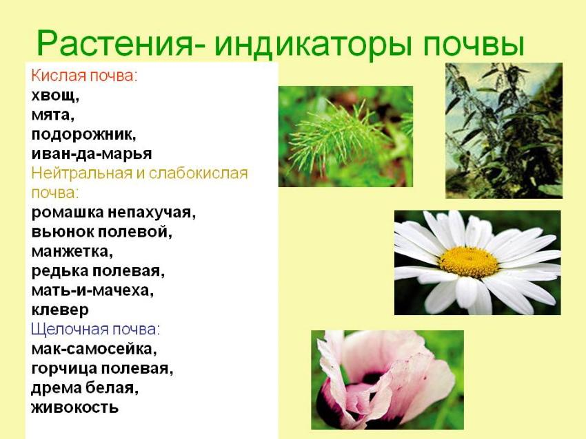 растения индикаторы