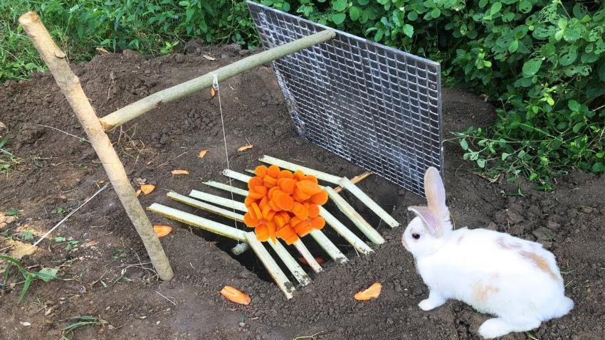 ловчая яма для зайца