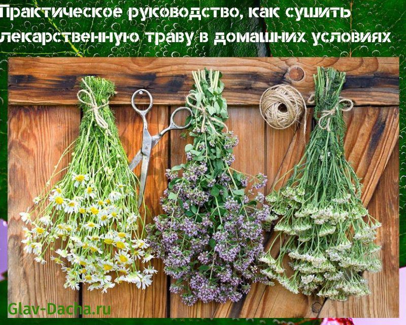как сушить лекарственную траву
