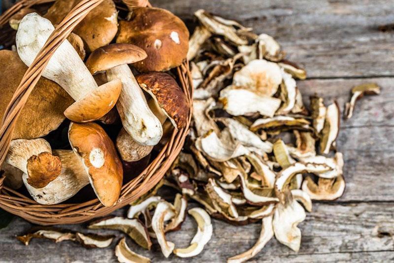 выбираем грибы для сушки