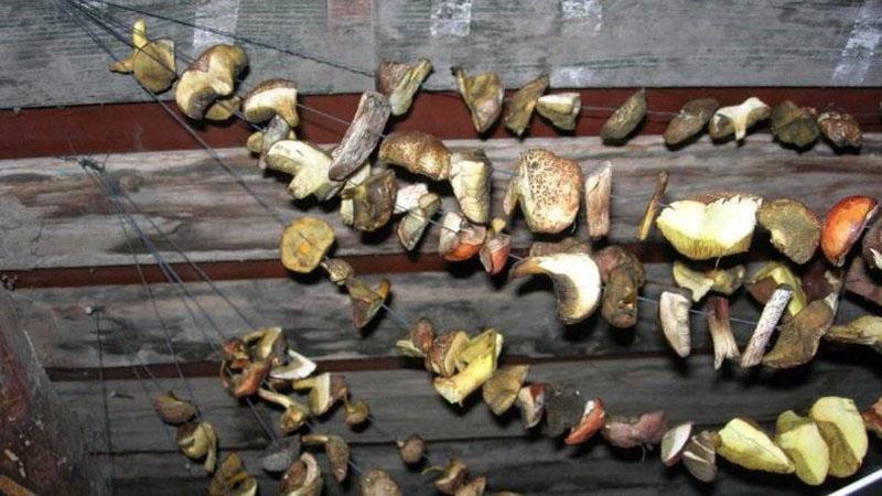 как сушить грибы в домашних условиях на воздухе