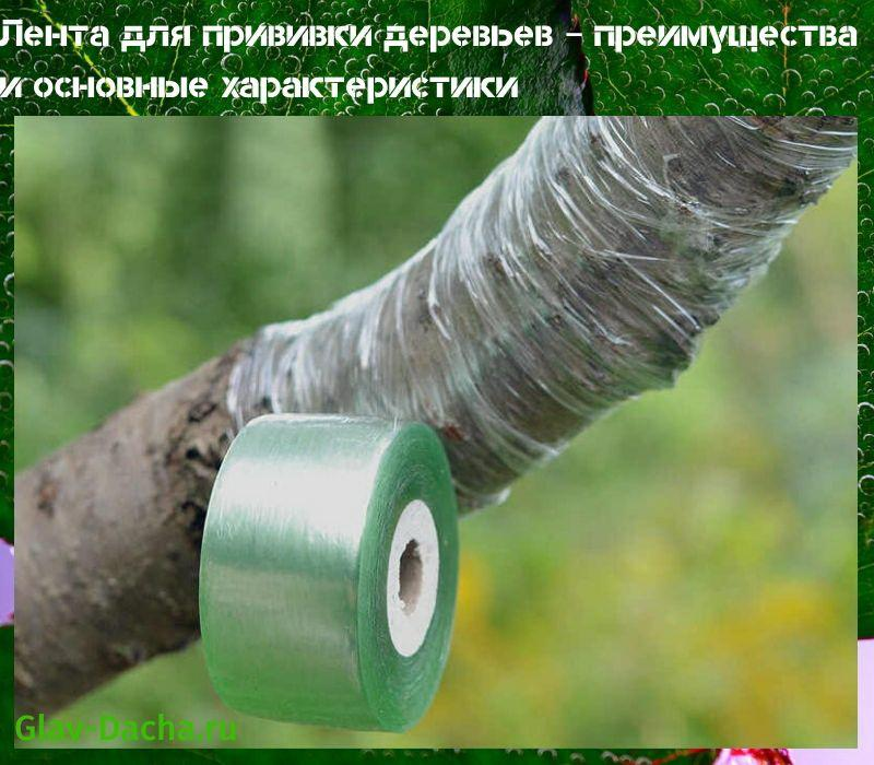 лента для прививки деревьев