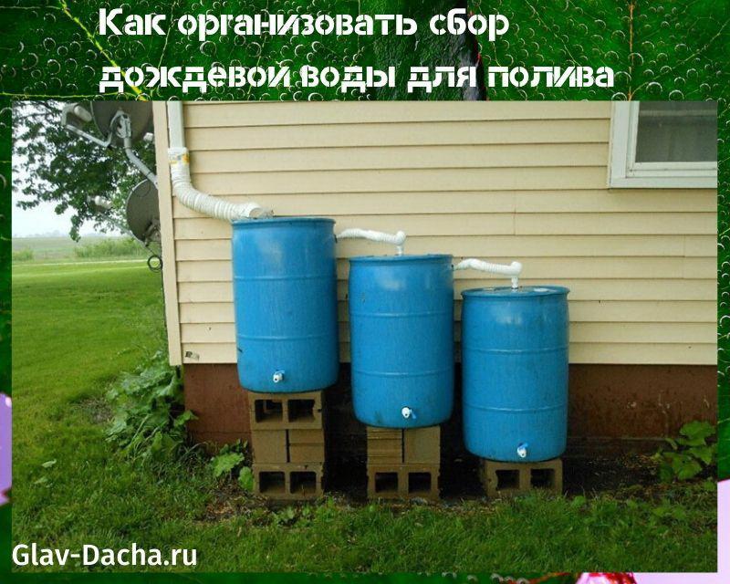 сбор дождевой воды для полива