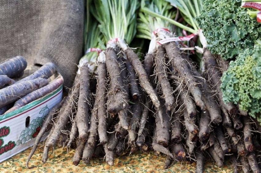 особенности выращивания скорцинелы