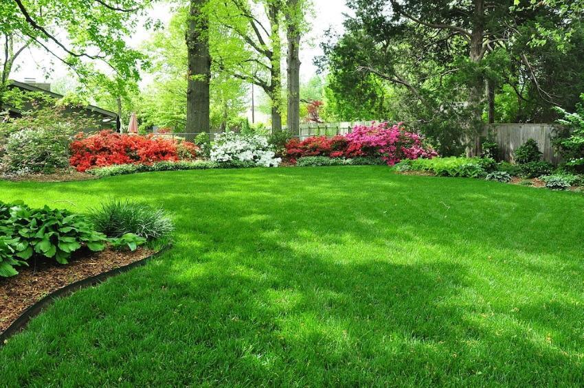 газонная трава которая уничтожает сорняки