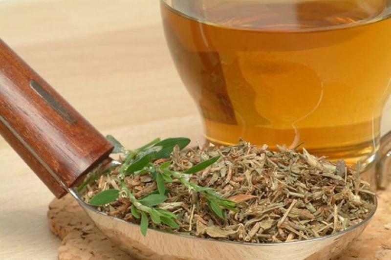 трава спорыш лечебные свойства и противопоказания