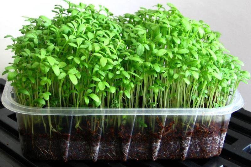 полезная для здоровья зелень