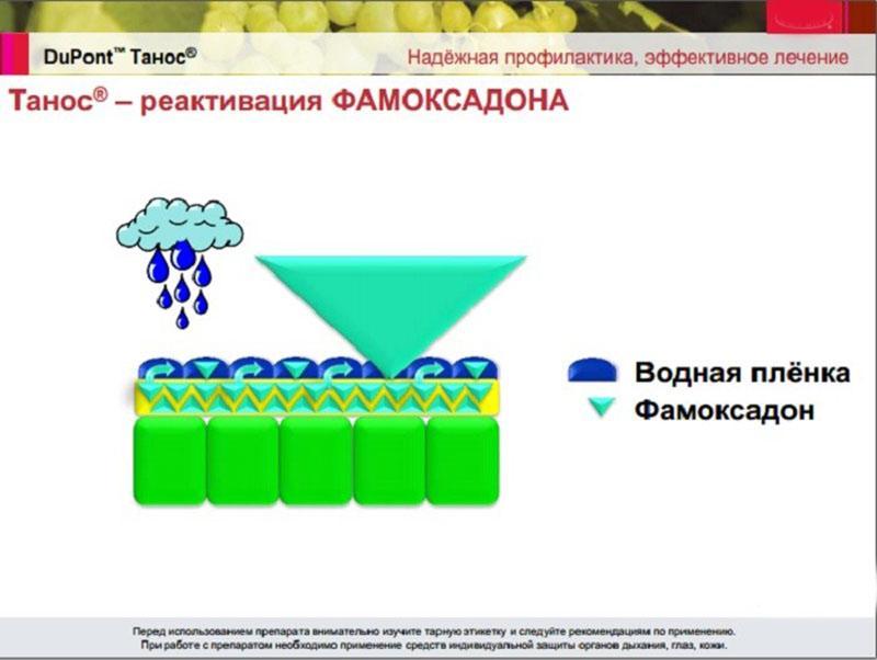 препарат проникает в ткани растения