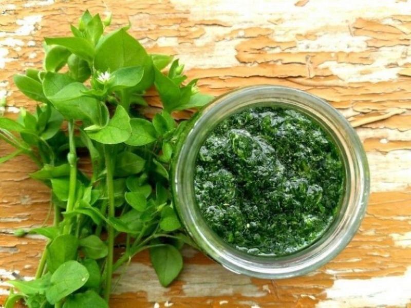 мокрица полезные свойства и противопоказания травы