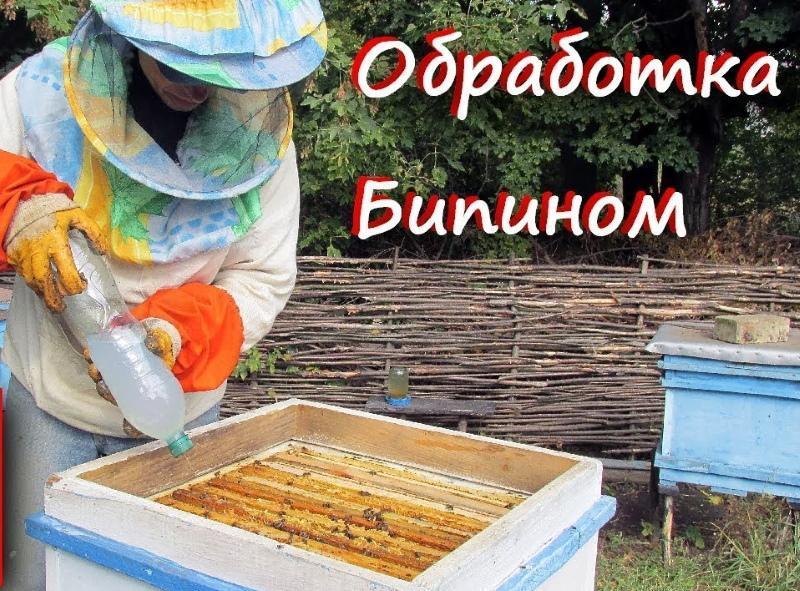 обработка пчел бипином осенью дозировка