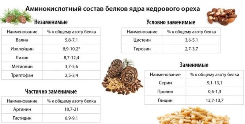 состав кедровых орехов