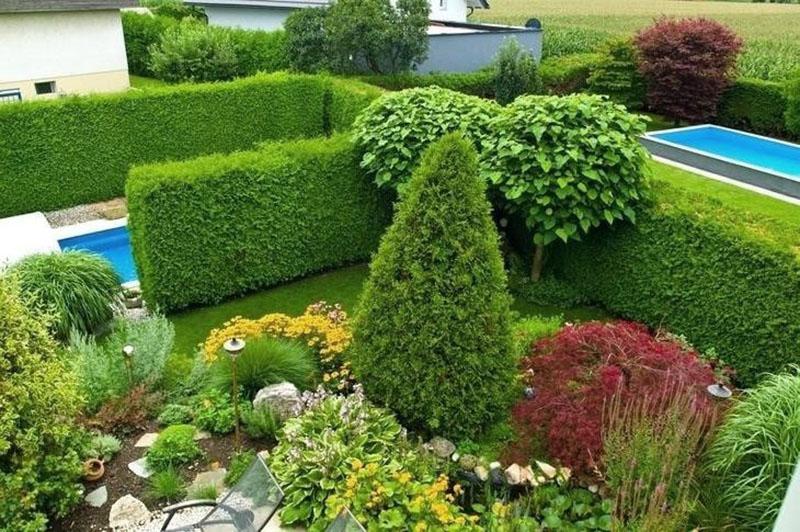 вечнозеленые растения на любой вкус