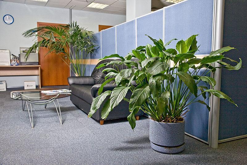 крупные цветы для офиса