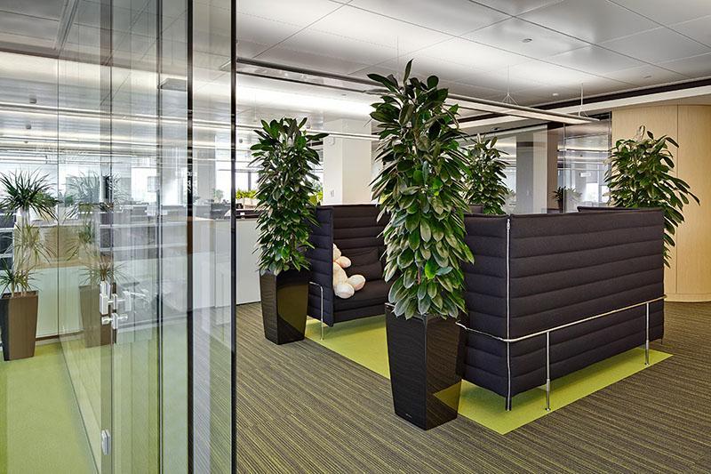 размещение цветов в офисе