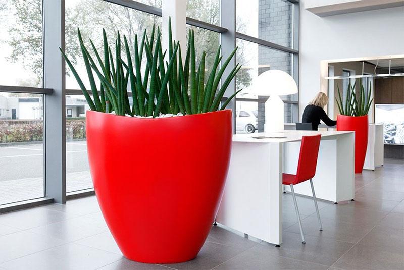 напольные цветы для офиса