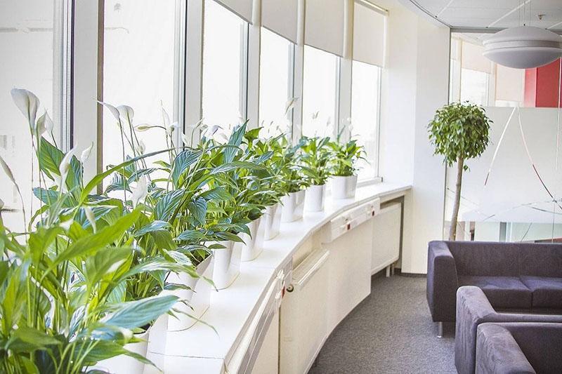 небольшие цветы для офиса
