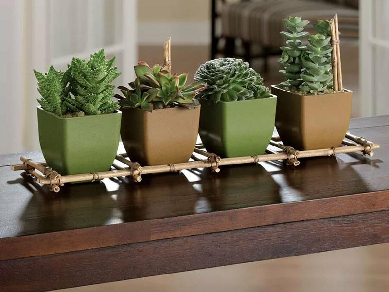 кактусы в интерьере