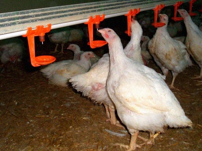 инструкция по применению е-селена для птиц