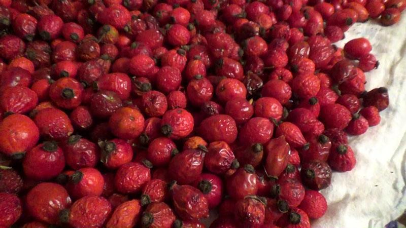 подсушенные ягоды шиповника
