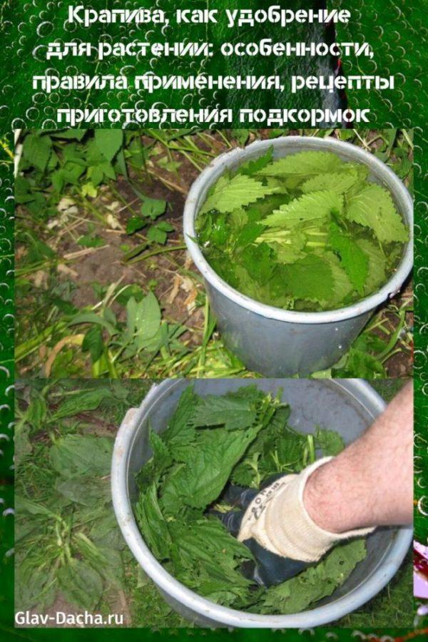 крапива как удобрение для растений