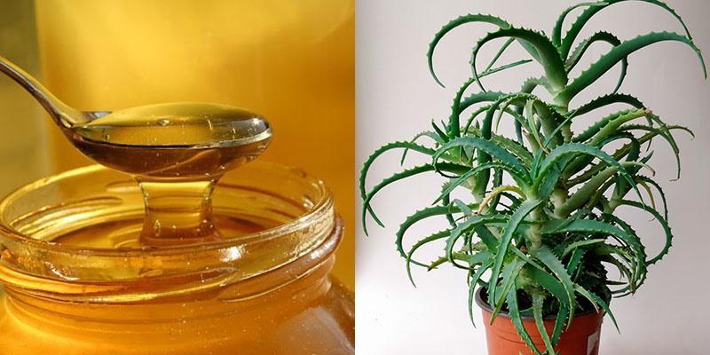 полезные свойства меда и алоэ