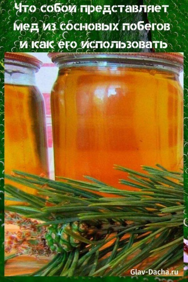 мед из сосновых побегов