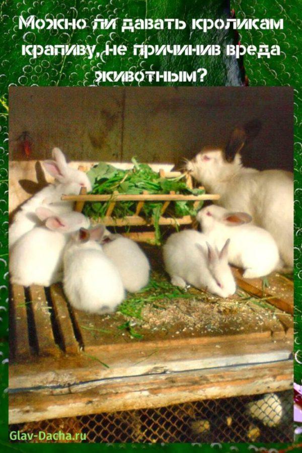 можно ли кроликам давать крапиву