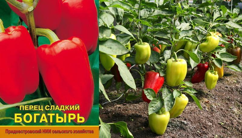 качественные семена и высокий урожай