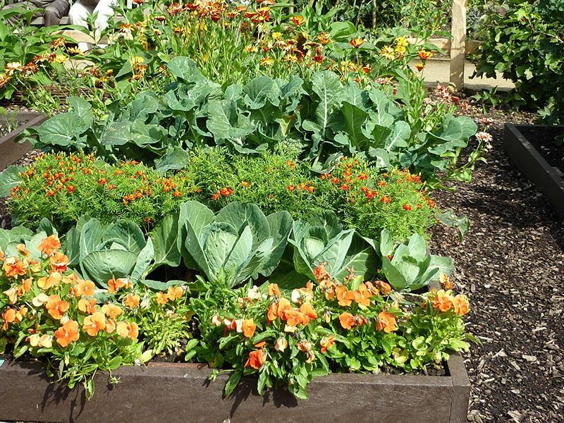 цветы и овощи рядом