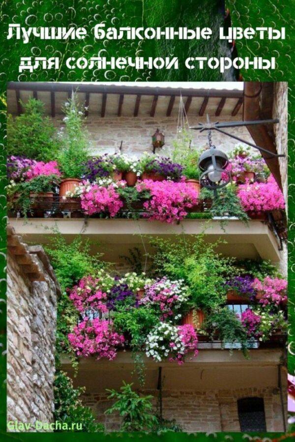 цветы для солнечной стороны
