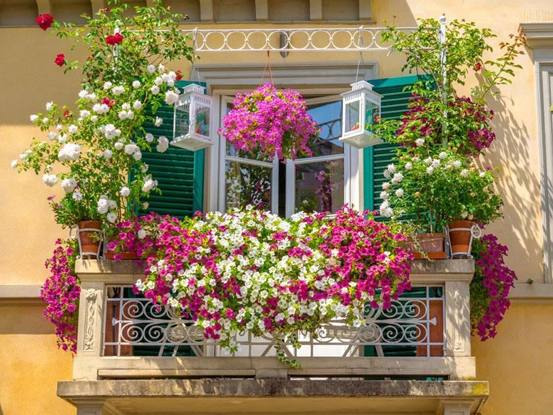 выбор цветов для балкона на солнечной стороне