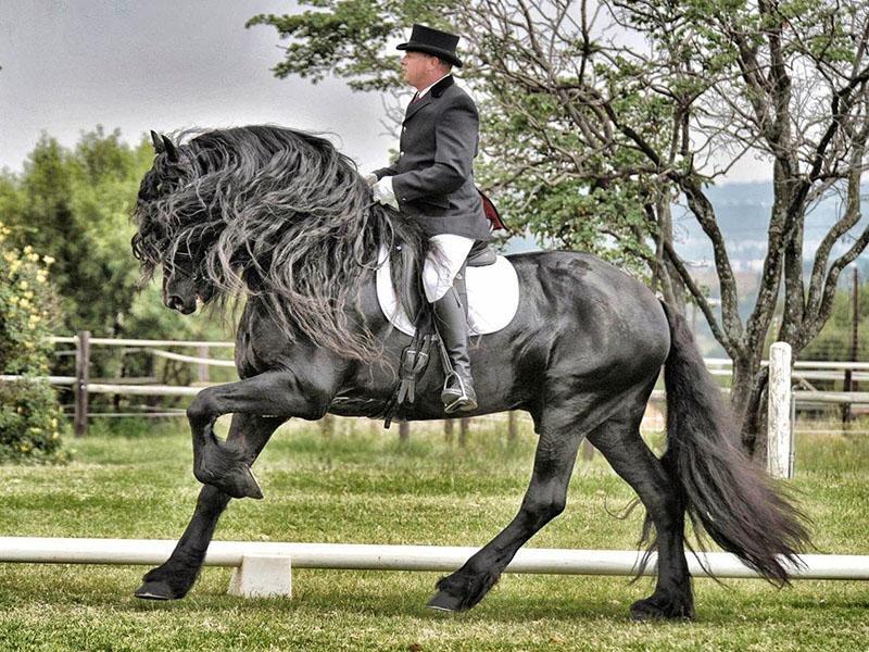 крепкая выносливая лошадь