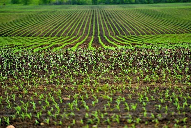 поле после обработки гербицидами