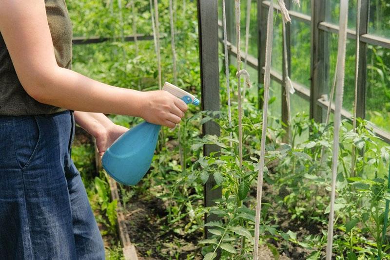 тщательная обработка растений
