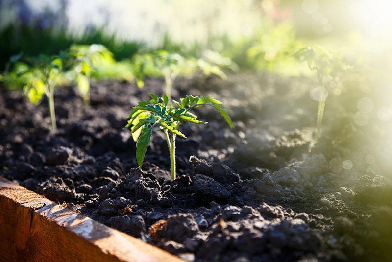 улучшение развития растений