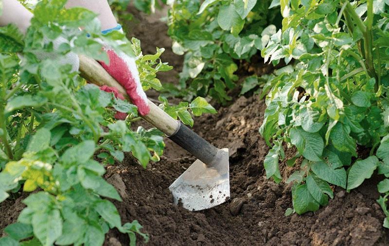 простое окучивание растений