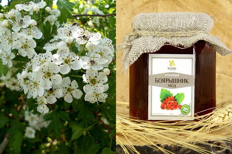 мед из цветков боярышника
