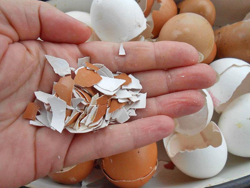 яичная скорлупа как удобрение на дачном участке