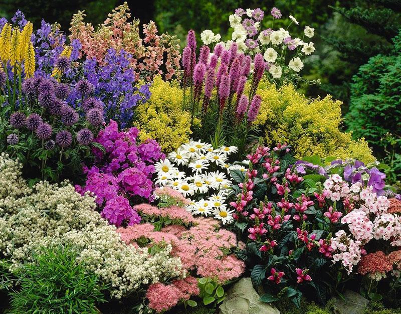 пышные цветущие клумбы