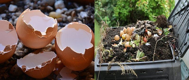 использование яичной скорлупы