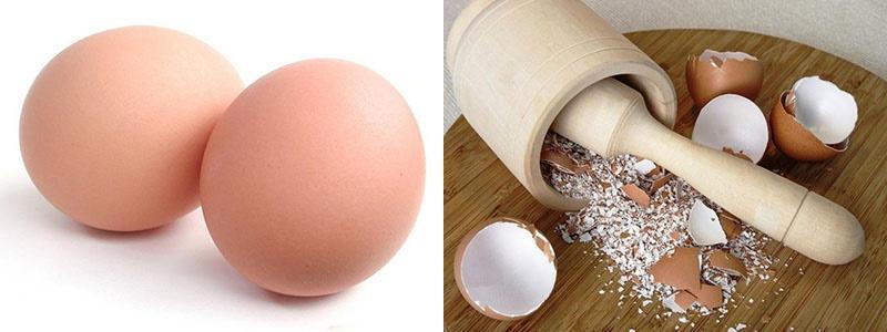 свежие яйца и сухая скорлупа
