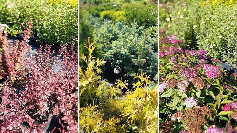однолетние и многолетние декоративные травы для сада