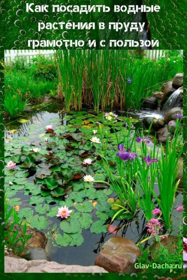 как посадить водные растения в пруду